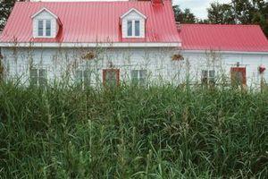 Come falciare l'erba troppo lungo