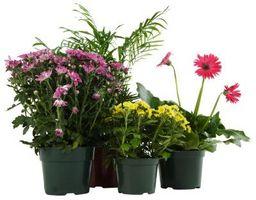Homemade Wick sistema di irrigazione per le piante in vaso