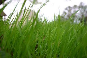 Istruzioni per l'applicazione di Scotts fertilizzante con soste