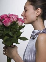 Istruzioni per Roses a stelo lungo