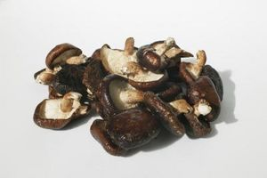 Strumenti di funghi di coltivazione