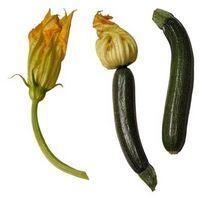 Ciò che rende Zucchini Blossoms Autunno?