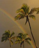 Quali sono le cause macchie marroni su fronde di palma?