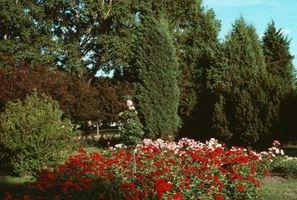 Sali di Epsom per Arbusti