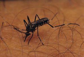Yard Fogger Controllo degli insetti