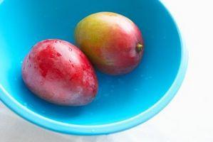 Come coltivare alberi Mango in contenitori