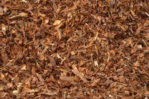Trucioli di legno pacciame fragola Piante