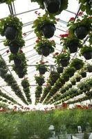 Come costruire una serra evaporativo raffreddamento