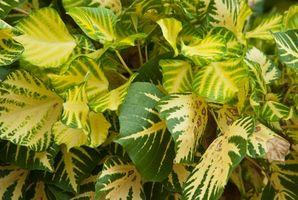 Temperatura ottimale per le piante