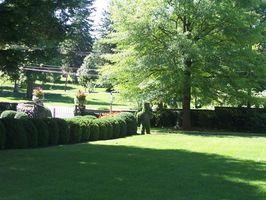 Come piantare Seme dell'erba in primavera a Minneapolis