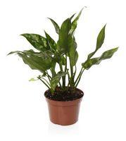 Quali sono le cause macchie marroni per le piante?
