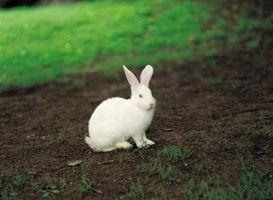 Può coniglio letame essere utilizzato per il compost?