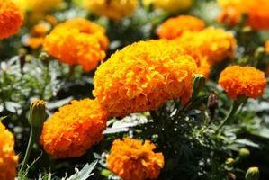Fiori Arancioni Nomi.Orange Yellow Nomi Di Fiori Ballantynetech Com