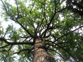 Le piante con fusti legnosi nei Giardini Botanici