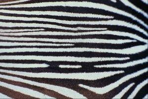 Come dipingere un cassettone con Faux Zebra