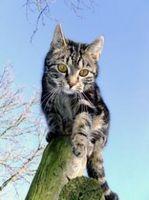 Come mantenere i gatti selvatici fuori del cantiere