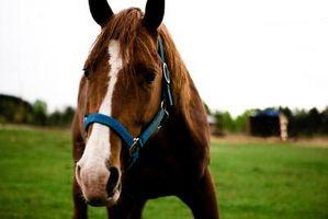 È possibile utilizzare letame di cavallo per New Sod?