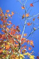 Tipi di foglie d'autunno