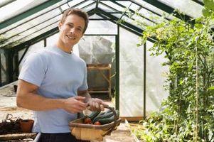 Come sollevare cetrioli in serra