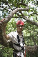 Come tagliare gli alberi Yourself