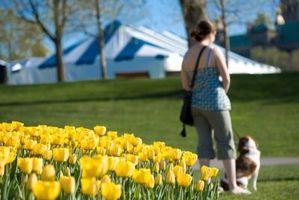 Sono Tulipani velenoso per i cani?
