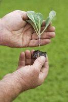 Come costruire un Hotbox solare per la germinazione dei semi