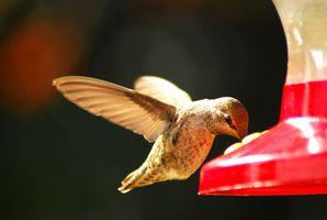 Fiori impollinati dagli uccelli