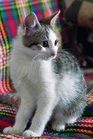 Come rimuovere peli di gatto Dalla Casa
