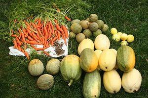 Come piantare un orto estivo