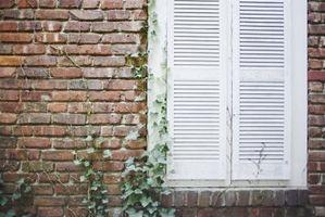 Come pulire Esterno Brick Alghe
