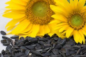 Semi di girasole e semi di zucca