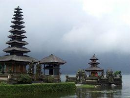 Piante adatte per Bali Giardini