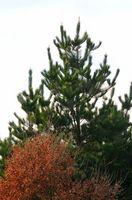 Costo del Arborist contro albero Trimmer