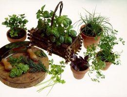 Fare Erba cipollina funzionano bene in una pentola con altre piante?