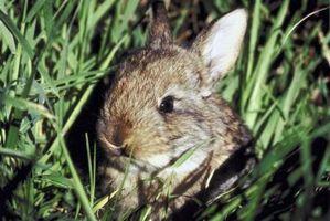 Escrementi di coniglio per il compost