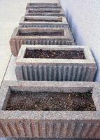 Come piantare & Harvest semi di Chia