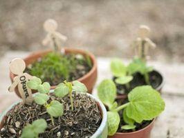 Elenco delle cose che influenzano la crescita delle piante o la germinazione dei semi