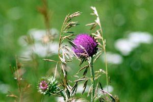 Qual è il modo più veloce per uccidere le erbacce e radici?