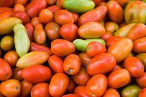 Come a maturare Pomodori Roma
