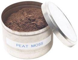Posso usare Peat Moss per invasatura piante?