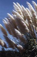Giardinaggio e ornamentali Grass