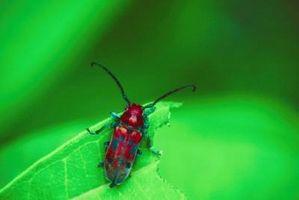 Come fare repellente naturale per giardino parassiti