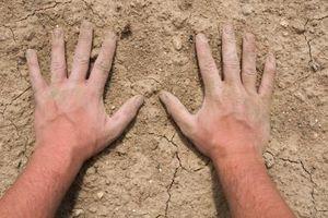 Terreno temperatura per la germinazione dei semi di verdure
