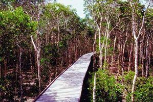 Le piante esotiche nelle Everglades