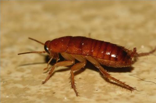 Il metodo migliore per uccidere scarafaggi