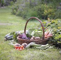 Cosa Minerali Sei il necessario per una buona orto?