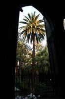 La cultura delle palme