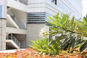 Ciò che è sbagliato con le piante da esterno con macchie marroni sulle foglie?