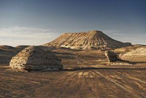 Alberi da ombra per l'High Desert
