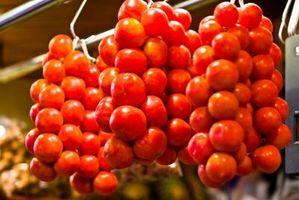 Pianta di pomodoro con macchie marroni su foglie gialle in Michigan
